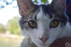 Gato / Cat (Tato Avila) Tags: animal fauna cat atardecer colombia bigotes colores gato vida campo felinos cielos clido
