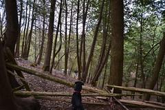 Finn Forest Fence (closeyoureyesandkiss) Tags: dog water creek forest puppy blackandbrown cedarfence shepherdcross aprilmay2016