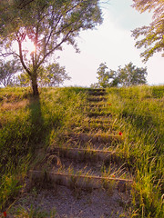 Sunset (Banga Attila) Tags: wood sunset sun flower detail nature grass stone landscape leaf stair outdoor