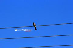 Birds (Ivan Andoni [Photo&Art]) Tags: sky bird birds fly bluesky