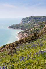 Covehurst Bay (ghostwheel_in_shadow) Tags: wild england flower sussex flora europe unitedkingdom hastings bluebell eastsussex firehills hastingscountrypark covehurstbay englandandwales