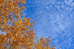 Autumn Sky (htaylor27) Tags: autumn sky ontario canada tree fall nature leaves clouds resort narrows sioux tomahawk