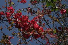 (Beatriz_Roveri) Tags: pink flower branch flor ramo bough galho