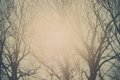 Blinding Light (H o l l y.) Tags: expired kodak film 35mm analog pentax nature landscape sun sunny summer trees light color bright retro indie vintage