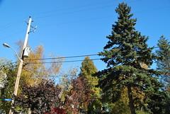 fall_309 (Sascha G Photography) Tags: autumn trees toronto color tree fall leaves leaf nikon seasons waterfront lakeshore indiansummer d60