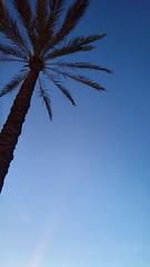 Palme (esseffdeearr) Tags: portugal algarve olhos dagua riu guarana praia da falesia albufeira portimao vacation