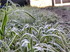 Frio matutino Il (mauriciocisternas) Tags: maana amanecer pasto frio hielo