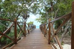 (cori573) Tags: ocean bridge trees beach sand walkway boardwalk