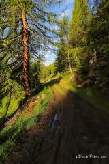 16-palu7 (Davide Podetti) Tags: parco val di dello pian peio stelvio pal valdisole