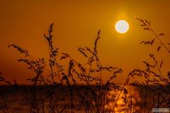 On the border of the lake (Anneke Jager) Tags: sunset orange sun canon zonsondergang mood moody sonnenuntergang sonne zon oranje sfeer annekejager