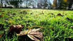 Just a Leaf (davidsherry2) Tags: nature leaves canon outdoors scotland g7x