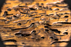 Squiggle (federicophotography) Tags: wood macro nature table photography nikon natural flash 100mm tokina micro d750 federico magnification federicophotography
