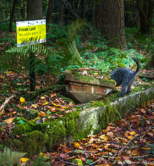 The naughty trespasser (derena_d.) Tags: england dog private photography woods unitedkingdom walk milo hampshire illiterate trespass alton noaccess ackenderwoods trespasser littledoglaughedstories