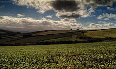 Distant rain (Ollie_57.. on/off) Tags: landscape view scene sky clouds crops fields farm flora nature hggt hdr rural countryside canon ef24105mm 7d photomatix summer july 2016 shaldon devon england uk affinityphoto ollie57 saariysqualitypictures