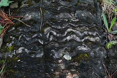Rock Waves (view2share) Tags: nature weather rock mi fossil moss spring waiting waves time michigan hill may glacier hills sediment age weathered geology upperpeninsula northwood fossils springtime northwoods uppermichigan 2016 northernmichigan gooselake may2016 deansauvola may302016
