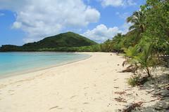 BVI 2013 (Sweetlassie) Tags: beach palms tortola smugglerscove bvi2013