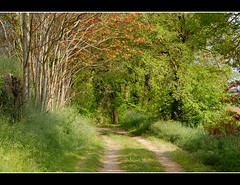 Tunnell of trees. (Grey travel) Tags: morning trees light shadow france green countryside spring path walk low gap peaceful sunny ring dirtroad lovely lush aude inviting tunnell sircle tunnelloftrees stjeandesplats