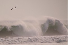 waveflight (philliefan99) Tags: nature water birds silhouette waves pacificocean elsalvador breakers brownpelican centralamerica pelecanusoccidentalis