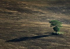 Survivor (Philipp Klinger Photography) Tags: trip italien autumn light shadow vacation italy brown holiday tree fall nature field landscape leaf nikon san europa europe solitude italia loneliness earth soil val valley tuscany lonely pienza toscana valdorcia leafs philipp survivor surv