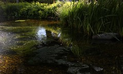 Fishy Element (brandsvig) Tags: summer water skne pond sweden july sunny m42 rug mf sverige damm malm vatten gttingen element sommar canon500d isco soligt 2013 westromat berolinawestromat