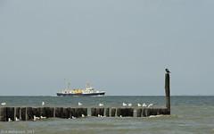 Westerschelde  strand Breskens (ditmaliepaard) Tags: water seagull zeeland schip breskens westerschelde zeemeeuwen theworldwelivein bej