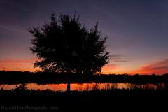 Sunrise in Savannah (HisPhotographs.com) Tags: tree colors silhouette sunrise georgia colorful silhouettes savannah lakemayer