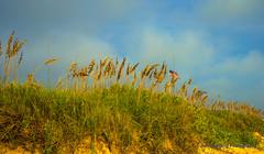 Veterans Day 2013 (T i s d a l e) Tags: beach coast duck nc nikon outerbanks tisdale d600 veteransday2013