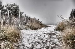 sea gull beach (marie palcic) Tags: snow beach capecod massachusetts monochromatic coastal snowfall snapseed