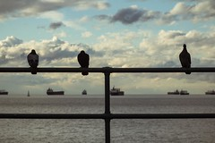 the best view (sp_clarke) Tags: birds silhouette vancouver wings pigeon flight englishbay