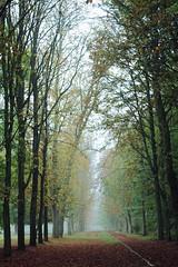 in (Simona.H.) Tags: autumn trees winter light sun sunlight paris france green love canon dark rouge photography photo alone photos natura utata arbre 550d passionphotography
