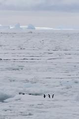 Antarctica - Day Three0375 (GLRPhotography) Tags: ice antarctica iceberg 100400 weddellsea princegustavchannel erebusandterrorgulf