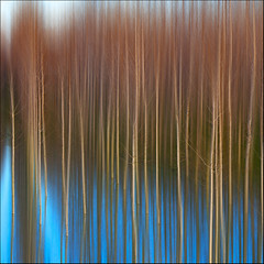 blue mirror (rita vita finzi) Tags: blue trees winter light nature water lines colours po mirrored ontheriver minimalnature