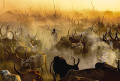Dinka Cattle Camp at Sunset, South Sudan (staurosmpakalis) Tags: sunset cattle southsudan smoke dinka cattlecamp dungfire