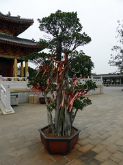 chengmai_032 (OurTravelPics.com) Tags: decorations tree square temple with central buddhistic yongqing chengmai