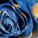 Starry Night Rose - Hybrid Oil & HDR