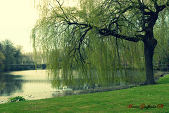Il lago dell'amore - Bruges (Marcogida) Tags: lake tree green love lago belgium brugge bruges belgio dellamore fiandra