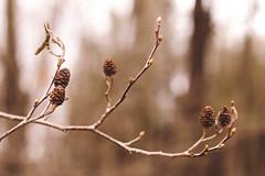 . (sullen_snowflakes) Tags: nature digital canon branch digitale natura ramo canoneos600d