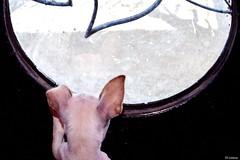 """"""" Freedom Dreams """" Foto:El Lemus (El Lemus) Tags: california friends light urban dog chihuahua amigos dogs animal animals america puppy mexico liberty amigo libertad freedom nikon friend peace finding dream free el perro sueños chihuahuas dreams perros urbano doggy baja find mexicali sueño busqueda lemus"""