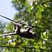 """Monkey on wire • <a style=""""font-size:0.8em;"""" href=""""http://www.flickr.com/photos/128593753@N06/16302832630/"""" target=""""_blank"""">View on Flickr</a>"""