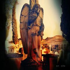 Fallen Angels 3 (edu_izu) Tags: