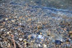 """Sous les vaguelettes du lac (Brigitte .. . """"Tatie Clic"""") Tags: 2015020117 auborddeleau transparence lac eau caillou minéral minéraux leau galet berge rivage rive"""