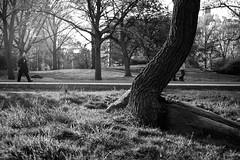 XT1-04-31-15-264-2 (a.cadore) Tags: nyc newyorkcity blackandwhite bw zeiss landscape centralpark candid uptown fujifilm uws carlzeiss xt1 biogont2828 zeissbiogon28mmf28 fujifilmxt1