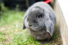DSC_0072 1 (divi333) Tags: rabbit bunny ferrara coniglio 2016 conigliando