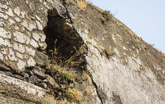 holes can grow (Tin-Tin Azure) Tags: world india heritage temple unesco archaeological mata gujarat pavagadh kalika champaner