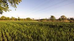 2016-05-15_10-56-55 (wiktor_furmaniak) Tags: nature landscape spring sony wideangle 10mm samyang passionphotography alpha65