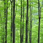 spring greens thumbnail