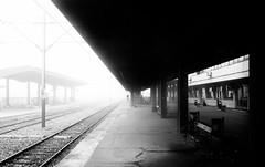 last passenger (Zlatko Vickovic) Tags: blackandwhite monochrome serbia streetphotography novisad vojvodina srbija streetbw streetphotographybw streetstreetphoto streetphotobw zlatkovickovic zlatkovickovicphotography