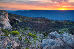 After The Fire || KINGS TABLELAND || BLUE MOUNTAINS (rhyspope) Tags: new sunset pope wales sunrise canon fire south australia falls wentworth kings valley nsw 5d aussie jamison rhys mkii bushfire regrowth rejuvenation tableland rhyspope