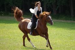 horse (horschte68) Tags: pentax k10d reiten pferd horse june juli 2015 sommer summer deutschland germany meadow speed galopp gallop brown braun 20150712 101352 weeds green grün zestforlife lebensfreude