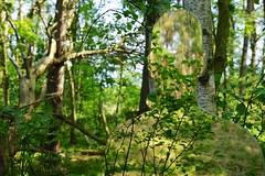 Rob Mulholland  Beyond the Forest  Lens: Sony FE 50mm 1.8 (franz-wegener.de) Tags: art mirror ghost installation zingst 2016 robmulholland beyondtheforest sonya7 sonyfe50mmf18 ghostlyartinstallation